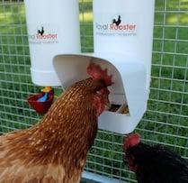 Tube Chicken Feeder