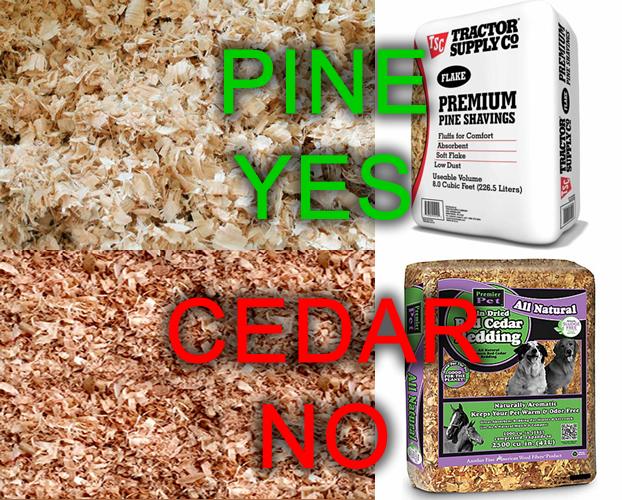 pine vs cedar bedding