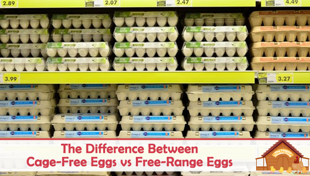 the difference between cage free eggs vs free range eggs