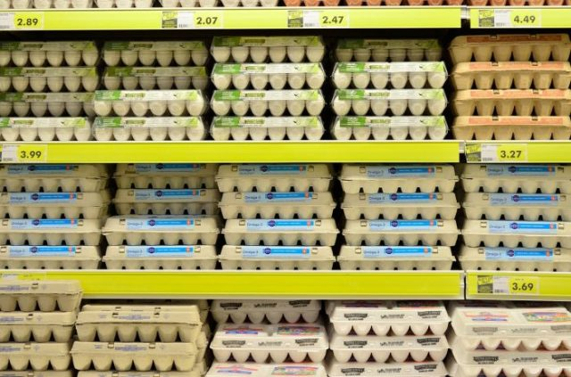 cage free vs free range eggs