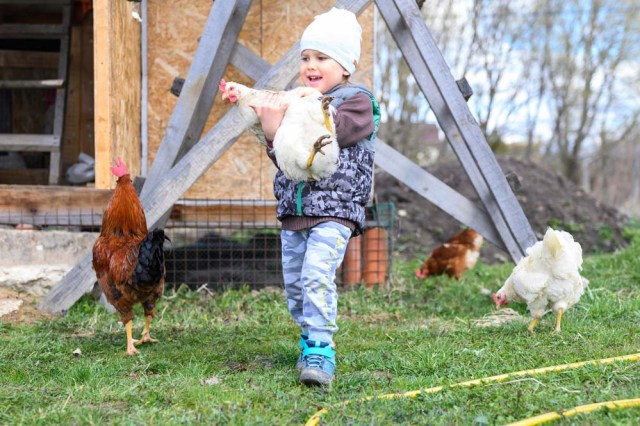 boy holding carrying chicken
