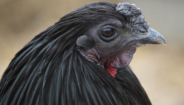 Sumatra Chicken