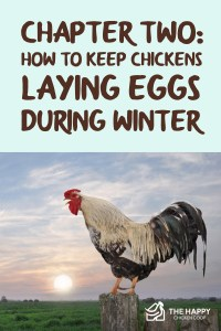 Chapter Two- How To Keep Chickens Laying Eggs During Winter