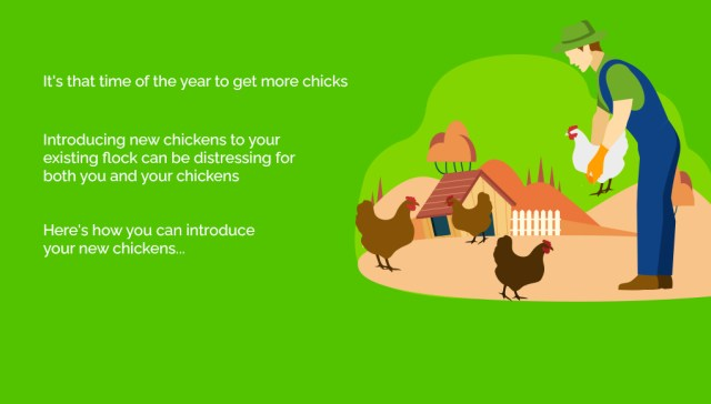 New Chickens to your flock