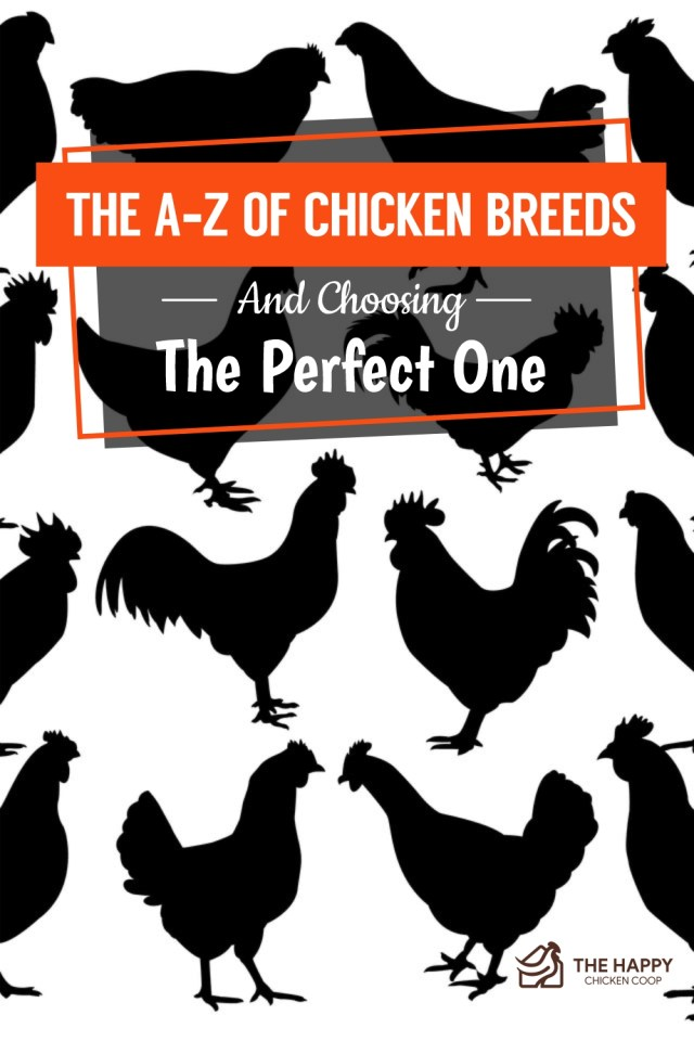 The A-Z of Chicken Breeds