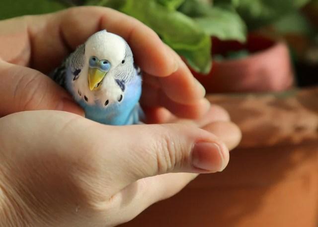 Bird Owner