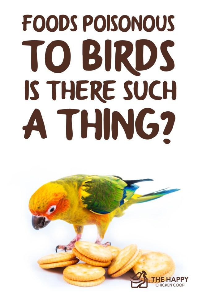 Foods Poisonous to Birds