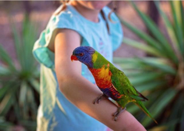 pet bird and children Lorikeets