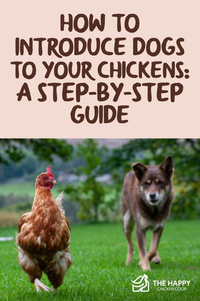 How to Introduce Dogs to Your Chickens A Step-by-Step Guide