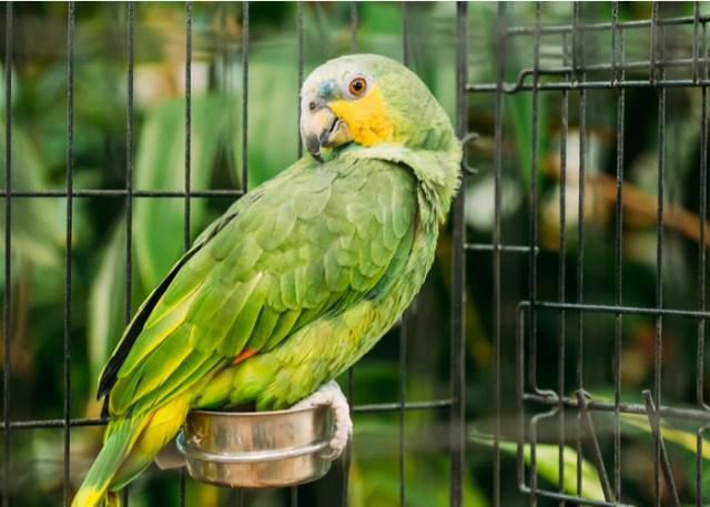 Green bird on an enclosure