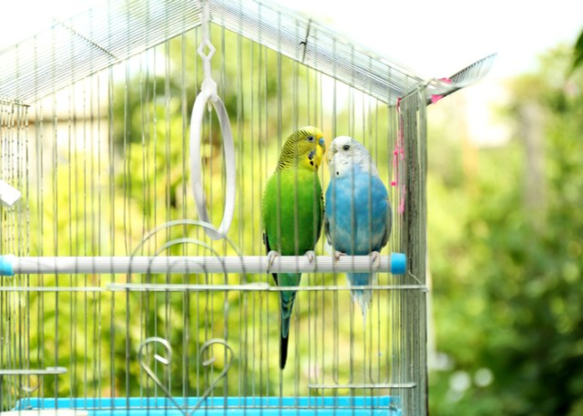 Parts of bird cages