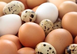 benefits of quail eggs