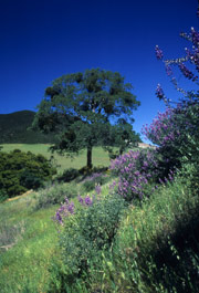 Danville California Shadow Hills