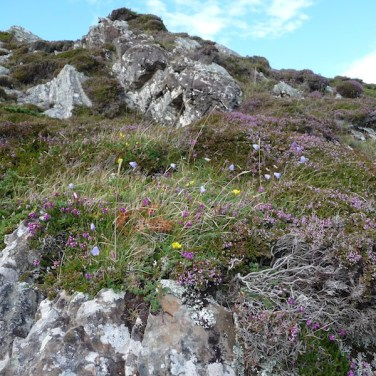 Garvellachs: Heather, harebells and wild juniper on lichen-covered rocks
