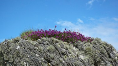 Garvellachs: Heather and lichen