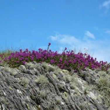 Garvellachs: Heather and lichen