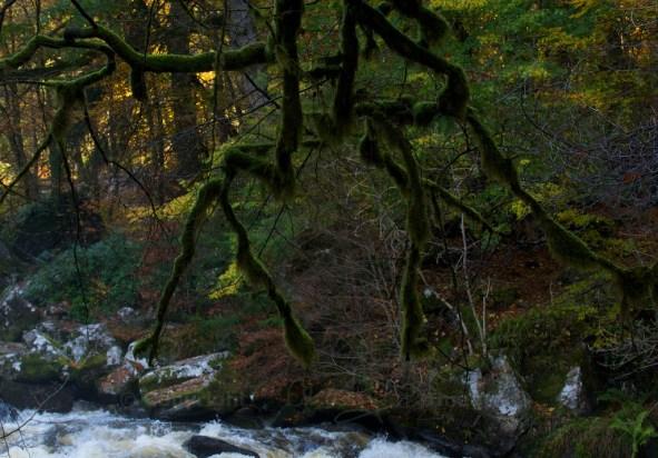 Hermitage Woods (Oct 2013)