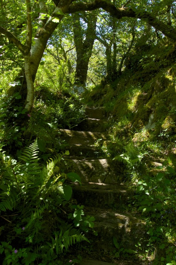 Steps in Taynish woods