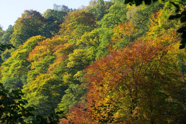 Killiecrankie autumn (12)