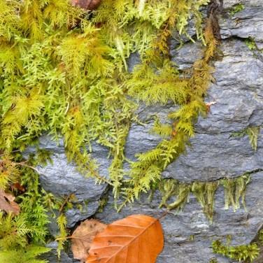 Loch Creran (CWa) 148
