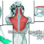 The Art of Stretching – 36 Pictures and a Video to Show You Exactly Which Muscle You Are Stretching
