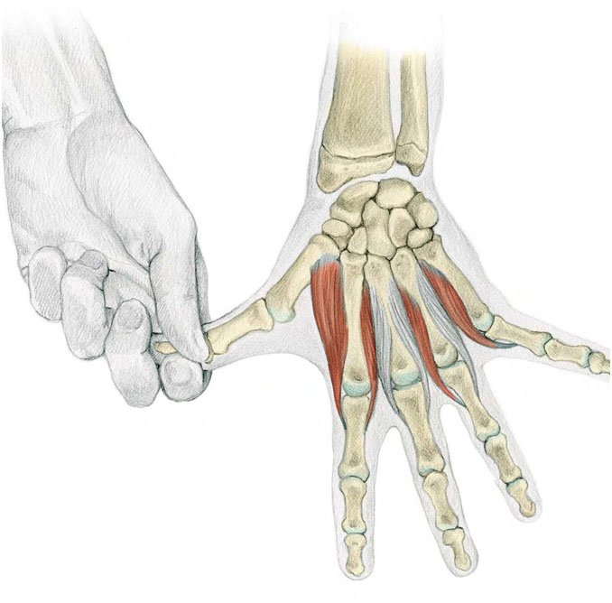 Finger-Separation