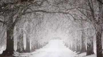winter-forest-walk-snow