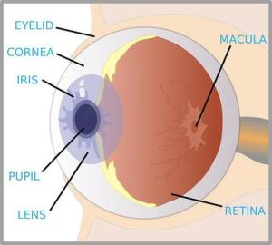Eye BirthmarksMay Impede Your Eyesight