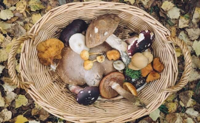 Best Fall Vegetables Mushrooms