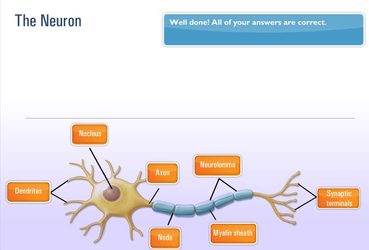 NASM the neuron
