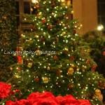Longwood Christmas 2012 061-2