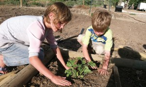 The Rangely Community Gardens' newest component is its children's garden, including a sunflower circle, bean fort and more. Above, Grace Noyes and Caleb Wiley give a watermelon plant a new home. Full-size and kid's plots are still available, along with volunteer opportunities in the community, botanical and children's gardens.