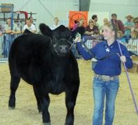 Kolbi Franklin – Meeker Market Champion Beef Sold for $5,250 – Buffalo Horn Ranch
