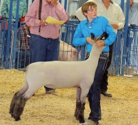 Macy Collins – Meeker Reserve Champion Sheep Sold for $2,250 – Buffalo Horn Ranch