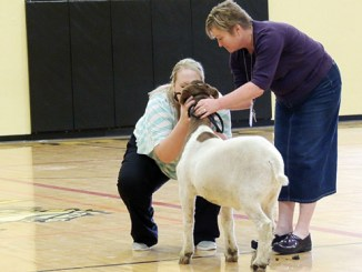 Meeker Elementary School third-grade teacher Samantha Wilson kisses a goat while MES Principal Kathy Collins waits her turn. The two had to kiss the critters because MES students read roughly 2,500 books in a month the school dedicated to STEM education. STEM stands for Science, Technology, Engineering and Math.