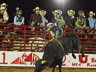 The seventh annual Rock 'N' Bull rodeo will begin at Columbine Park at 7 p.m. Saturday.