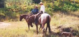Mike and Lori Chintala of Meeker, Colorado riding on their Forest livestock grazing allotment.