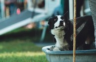 Cooling off in the trough. Dale Hallebach