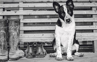 """The winner of the first photography contest is """"Ready to Work"""" by Betty Gillis of Lavernia, Texas. Courtesy Photo"""