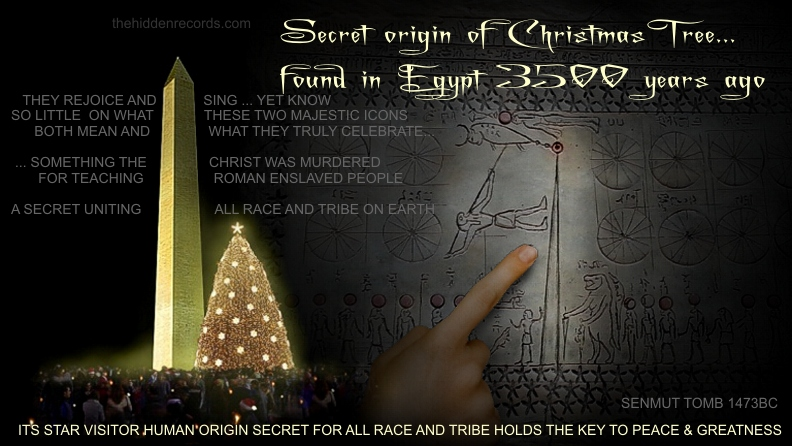 secret of the Christmas tree in Egypt
