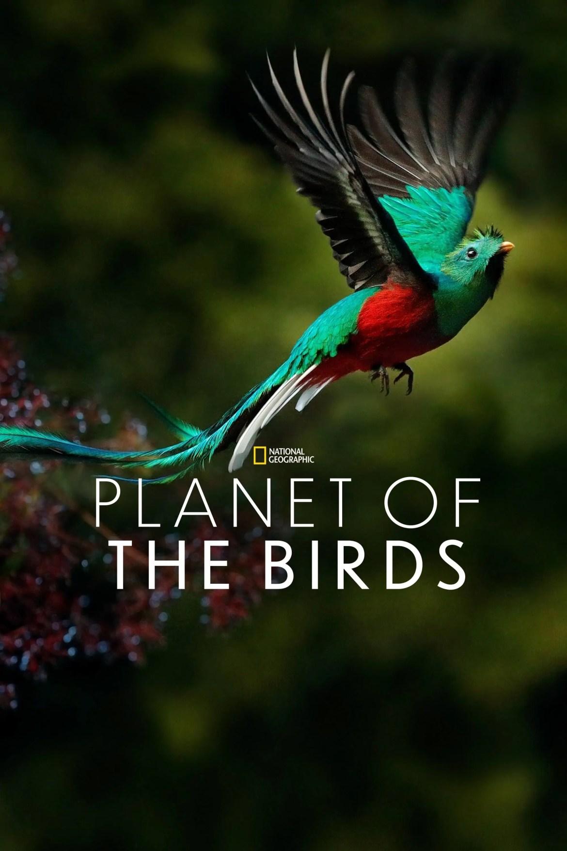 Disneyplus film Planet of the birds