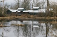 nisqually, nature walk, hiking with kids, wetlands