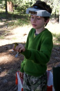 birds, kids in nature, camping with kids, bird banding
