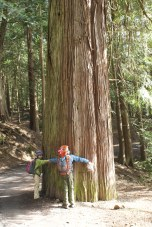 Moran State park, Cedar, Old Growth, Hiking with Children