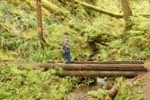 forest bridge stream nature kids hiking