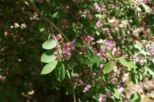 kruckeberg botanic garden kids in nature gardening native plants