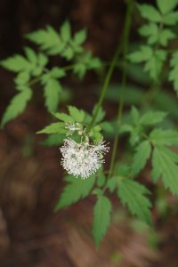 poisonous plants wildflowers washington east fork lewis river moulton falls park