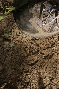 hiking with children, animal tracks in washington, fawns