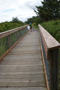 hiking with children, nature walks, birding, wetlands, grey's harbor