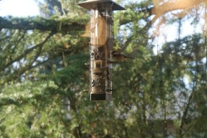bird feeder, backyard birds, urban birding